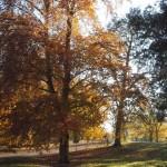 Londres no outono