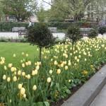 Jardim de flores em Londres